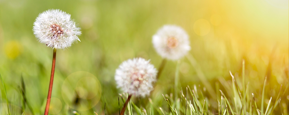 Controlling Common Weeds in Your Lawn
