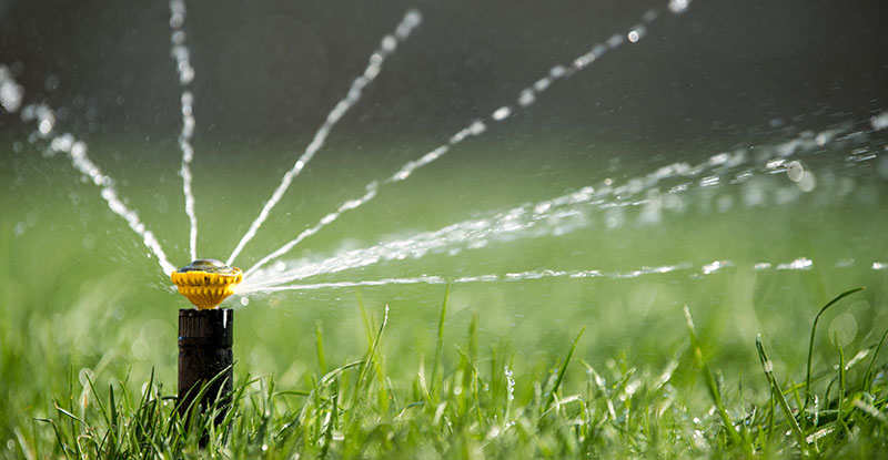 How Often Should You Water the Lawn