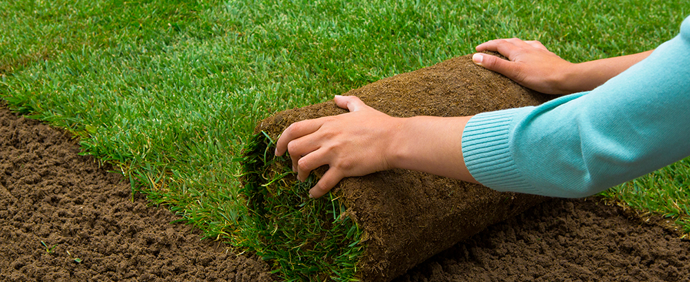 When is the Best Time to Plant a Yard?