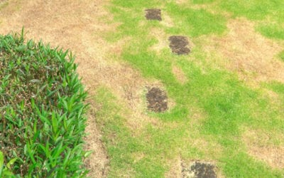 Best Methods for Repairing Bare Spots in Your Lawn